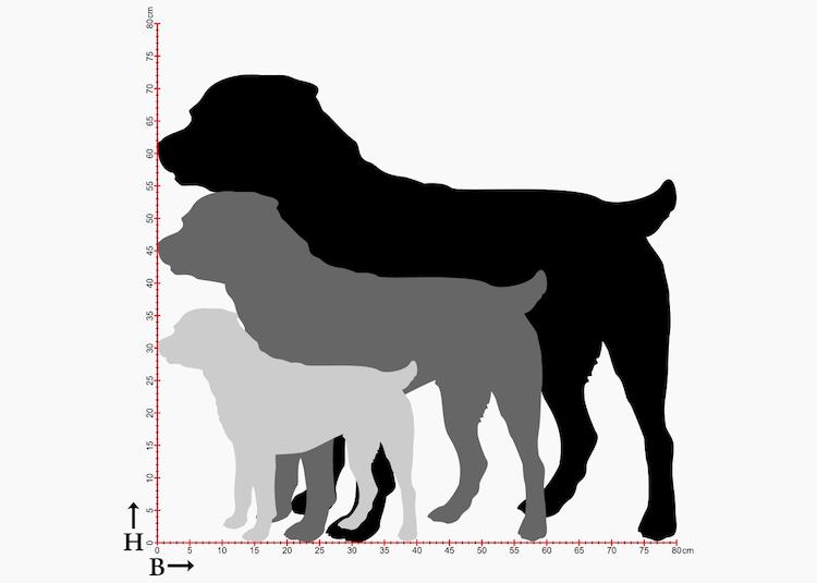 Tre olika storlekar på siluetter av Rottweiler.