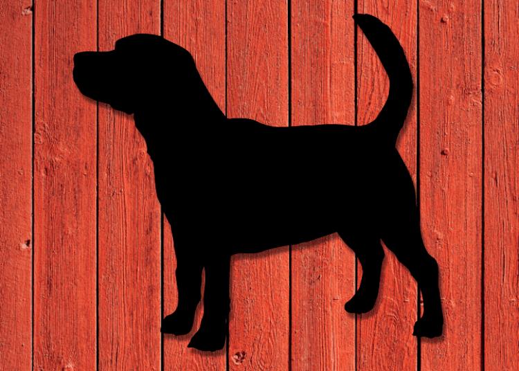 Siluett av en Beagle på husvägg.