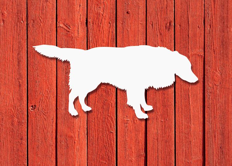 Vit Border Collie-siluett på röd husvägg.