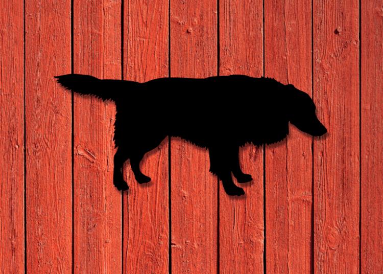 Svart siluett av en Border Collie på röd träpanel.