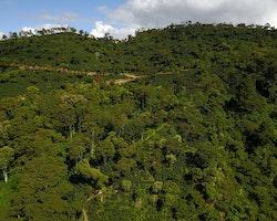 Nicaragua Washed Pacamara Gigante - Finca La Bendicion, Traceability, 1kg