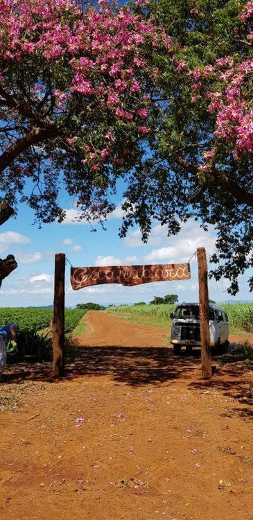 Brazil - Fazenda Guanabara - pulped natural Catuai - Traceability UTZ, 1 kg