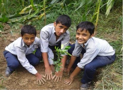 5 bambusplanter i Nepal med digitalt takkebrev