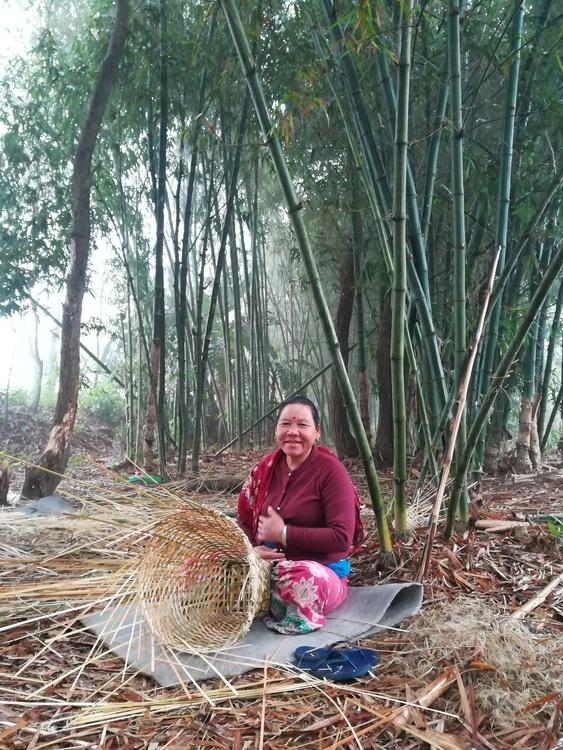 Julegave: 10 bambusplanter i Nepal med julekort