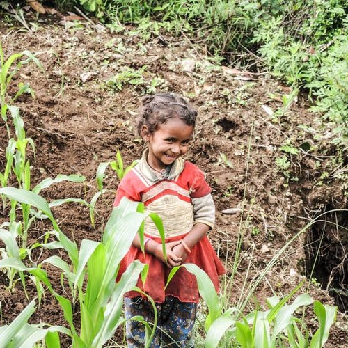 15 bambusplanter i Nepal med takkebrev