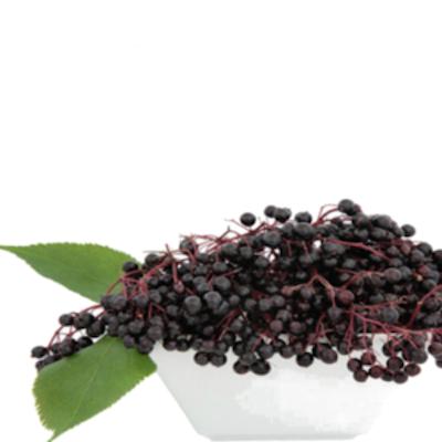 Tfa - Elderberry