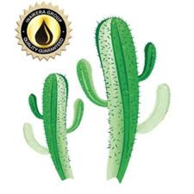 Inawera - Kaktus