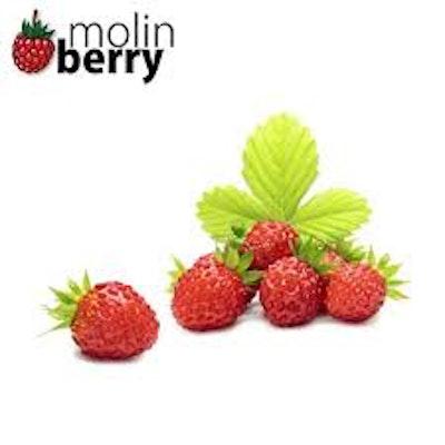Molin Berry - Wild Strawberry