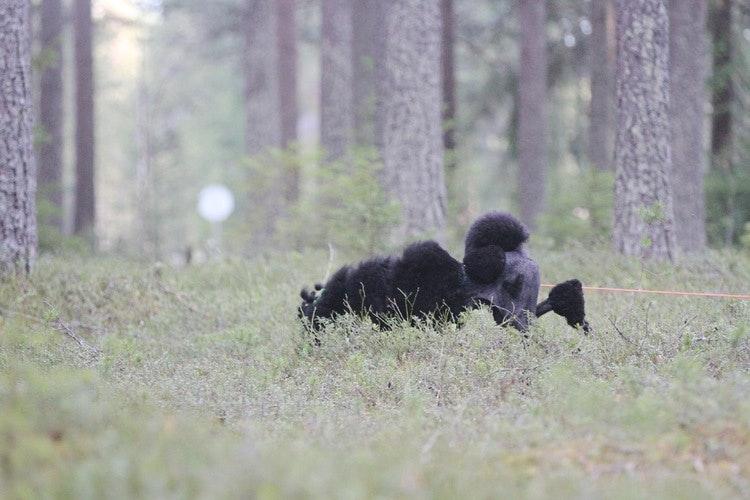 VILT & BLODSPÅR FORTSÄTTNING