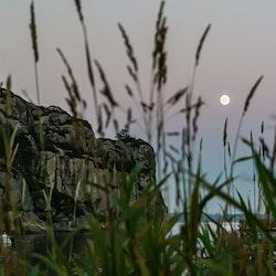 Strå i fullmåne