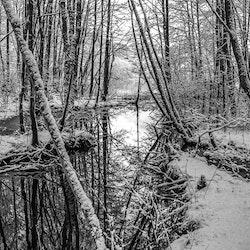 Stille vintervann