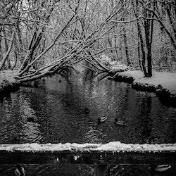 Ender i vintervann