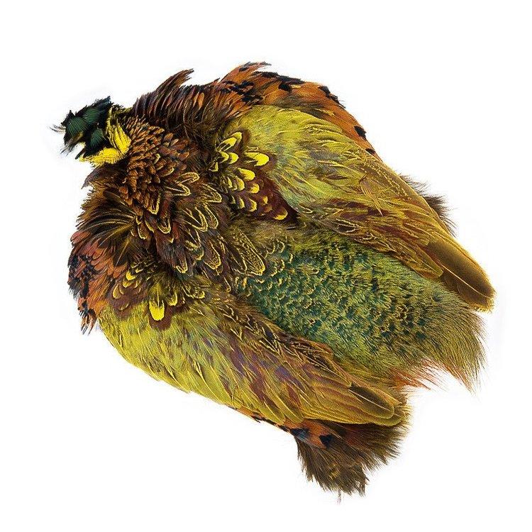 Ringneck Pheasant Skin