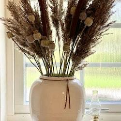 Vasstrå 60cm - Torkade blommor