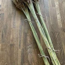 Vasstrå 100cm - Torkade blommor