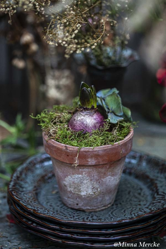 5 olika sätt att ha hyacinter till jul