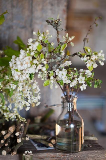 Driv kvistar i blom