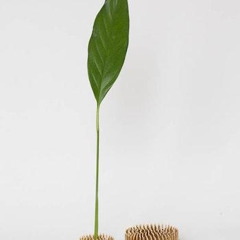 Blomsterfakir set - 1 stor & 1 liten