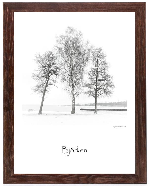 Björken
