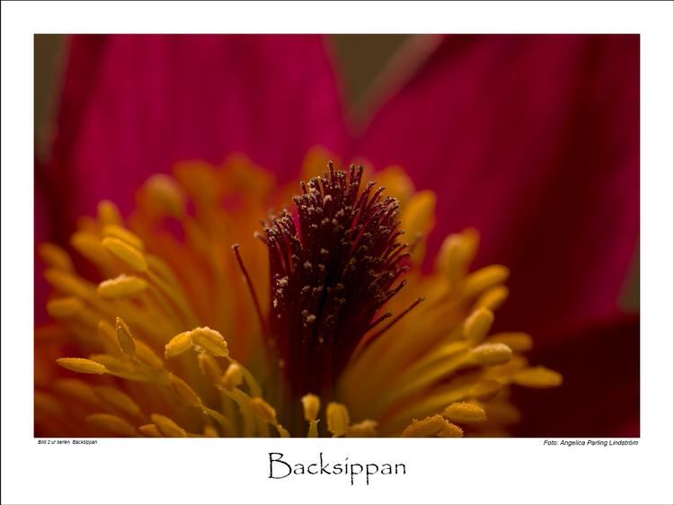 Backsippan 2