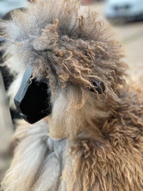 Gungfår i svenskt fårskinn