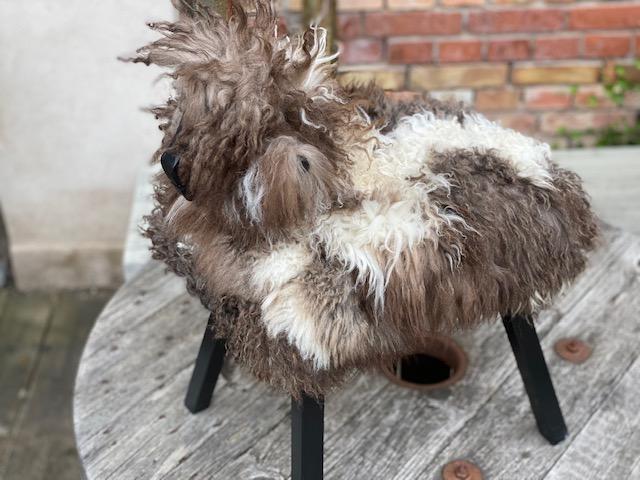 Kopia Fårstol  i svenskt fårskinn
