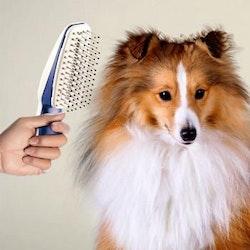 Hund- och kattborste med automatiskt hårbortagare