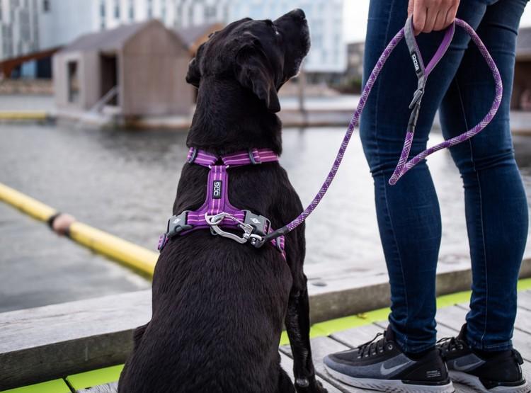 Dog Copenhagen Sele Mocca