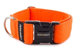 Hundhalsband Neon Orange