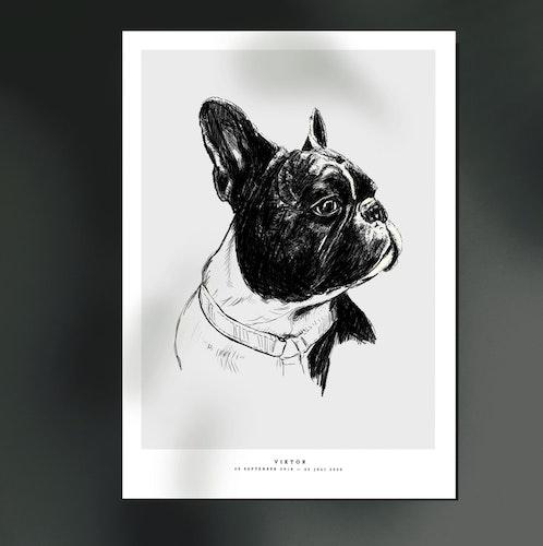 Djurporträtt