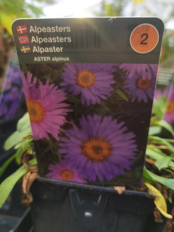 Alpaster