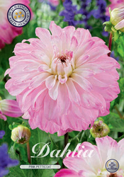 "Dahlia ""Pink Petticoat"""