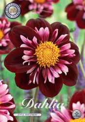 "Dahlia ""Joyfull Investment"""