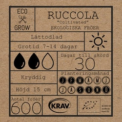 Ruccola - Cultivated