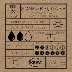 Sommarsquash - Yellow Golden
