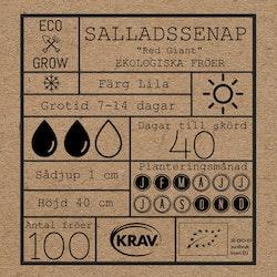 Salladssenap - Red Giant
