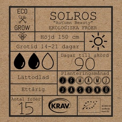 Solros - Autumn Beauty