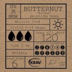 Butternut - Waltham