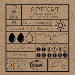 Spenat - Giant Winter