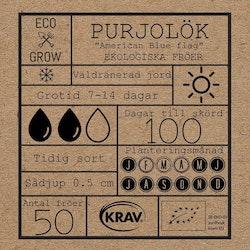 Purjolök - American Blue Flag