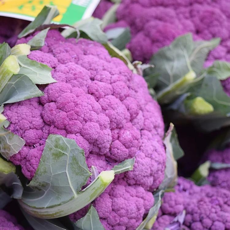 Blomkål - Di Sicilia Violetto