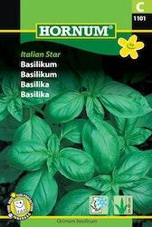 Basilika - Italien Star