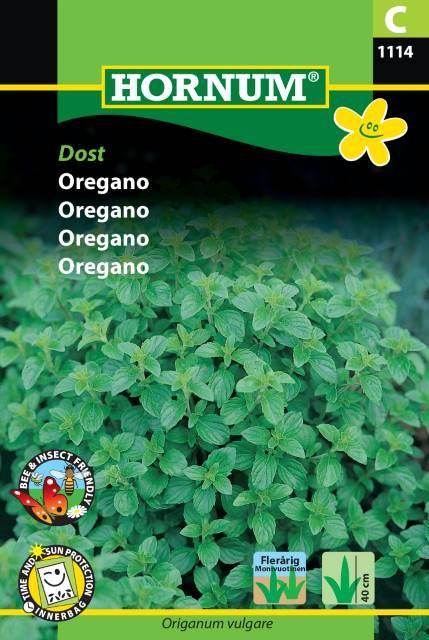 Oregano - Dost
