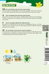 Slätbladig Persilja, Hornum - Gigante d'Italia