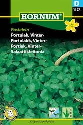 Portlak, Vinter - Postelein
