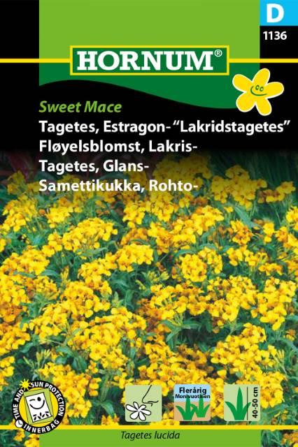 Tagetes, Glans /Mexikansk dragon - Sweet Mace