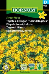 Tagetes, Glans /Mexikansk dragon - Sweet Mace