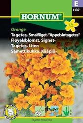 Tagetes, liten /Appelsintagetes - Orange