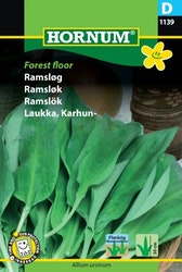 Ramslök - Forrest Floor