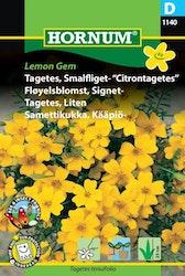 Tagets, Liten (Citrontagetes) - Lemon Gem